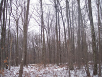 Home for sale: Lot 3, Roaring Brook Rd., East Stroudsburg, PA 18302