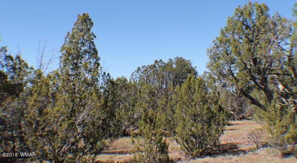 2 Acres Off Of Acr N. 3114, Vernon, AZ 85940 Photo 13