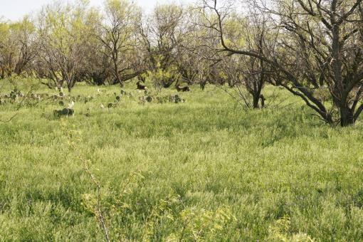 3 N. Hwy. 83, Eden, TX 76837 Photo 24