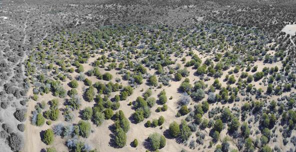 11100 W. Rawhide Trail, Skull Valley, AZ 86338 Photo 20