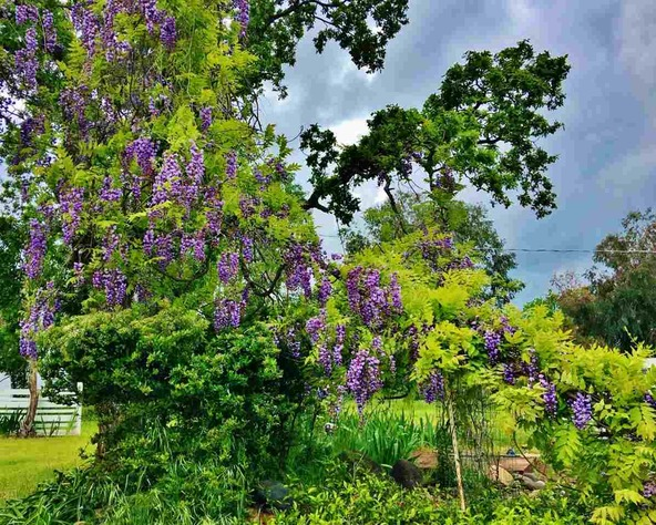 19418 Alta Vista Dr., Red Bluff, CA 96080 Photo 6
