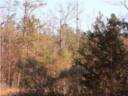 200 Fox Run, Deatsville, AL 36022 Photo 2