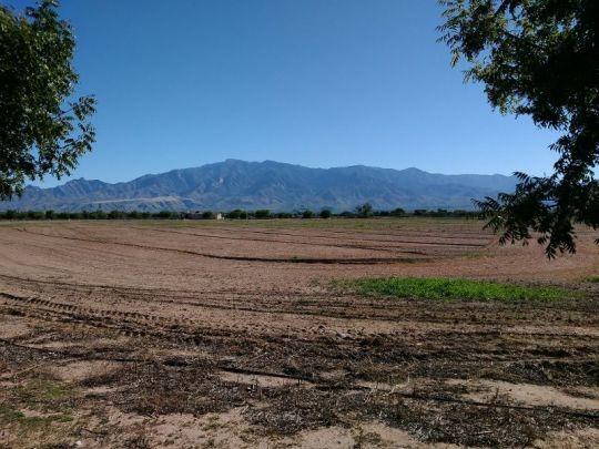6515 W. Sycamore Ln., Pima, AZ 85543 Photo 5