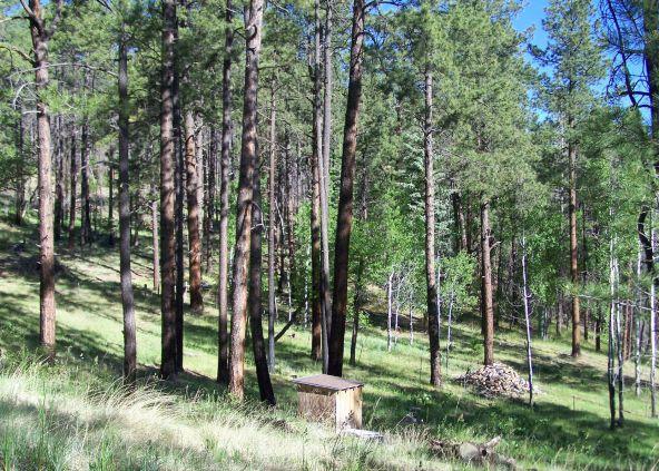 10 County Rd. 2153, Alpine, AZ 85920 Photo 2