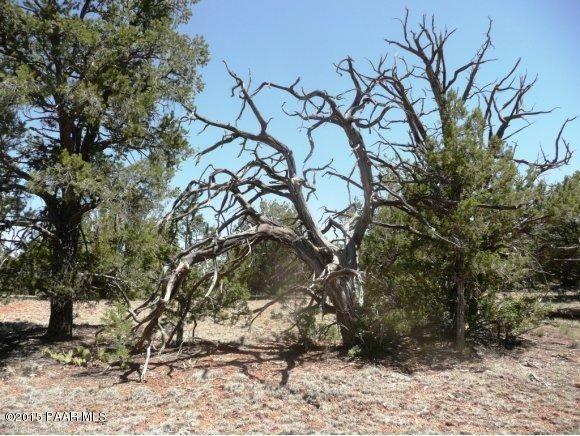 1024 Sierra Verde Ranch, Seligman, AZ 86337 Photo 7
