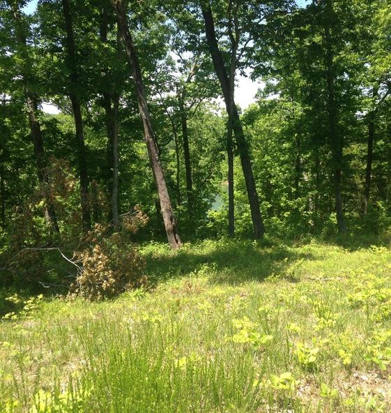 25 North Shore Dr., Monticello, KY 42633 Photo 2