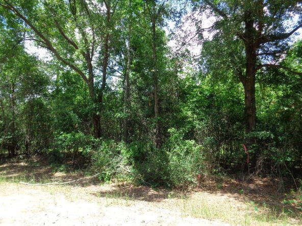 7.1+-Ac Lucy Grade Rd., Ashford, AL 36312 Photo 13