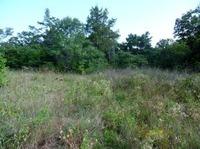 Home for sale: Lot 11 Cedar Cove Subd., Reeds Spring, MO 65737