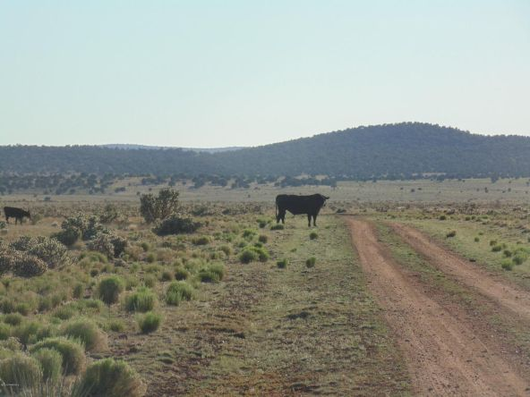 1430 Sierra Verde Ranch, Seligman, AZ 86337 Photo 2
