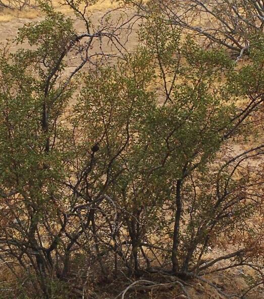 36 N. 12th St., Phoenix, AZ 85086 Photo 8