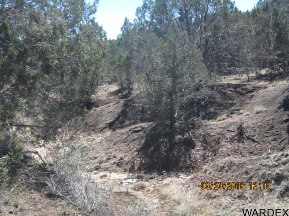 33307 W. El Caballo Rd., Seligman, AZ 86337 Photo 17