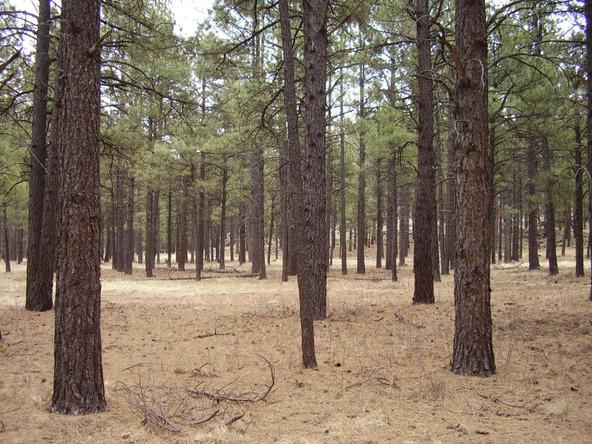 2750 N. Jason Way, Flagstaff, AZ 86001 Photo 5