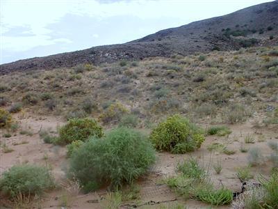 1200 Vista de Bosque S.W., Los Lunas, NM 87031 Photo 10
