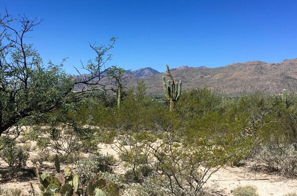 12441 E. Fireweed, Tucson, AZ 85749 Photo 4