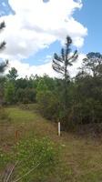 Home for sale: 16510 N.W. 174th Dr., Alachua, FL 32615