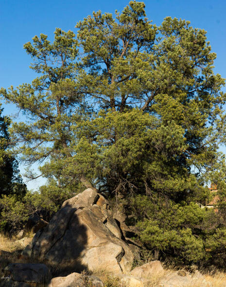 17955 W. Buckhorn Dr., Peeples Valley, AZ 86332 Photo 37