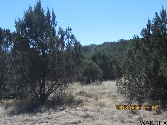 33307 W. El Caballo Rd., Seligman, AZ 86337 Photo 13