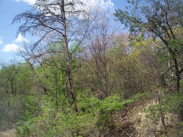 Plum Run Rd., Ridgeley, WV 26753 Photo 15