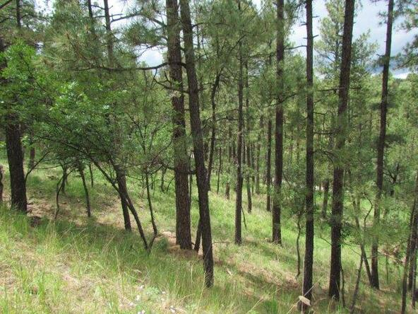 119 del Monte Dr., Alto, NM 88312 Photo 8