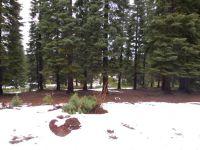 Home for sale: 212 Snowy Peak Way, Lake Almanor, CA 96137