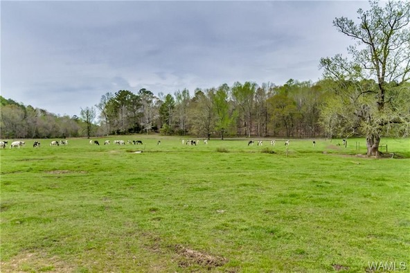 14061 Doyle Beams Rd., Cottondale, AL 35453 Photo 20