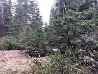 Home for sale: 3-G-17 Elk Springs Ct., Mccloud, CA 96057