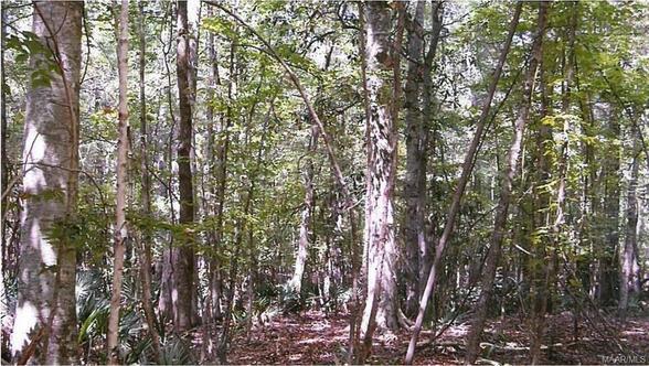 279 Tiger Oak Dr. Rd., Pike Road, AL 36064 Photo 36