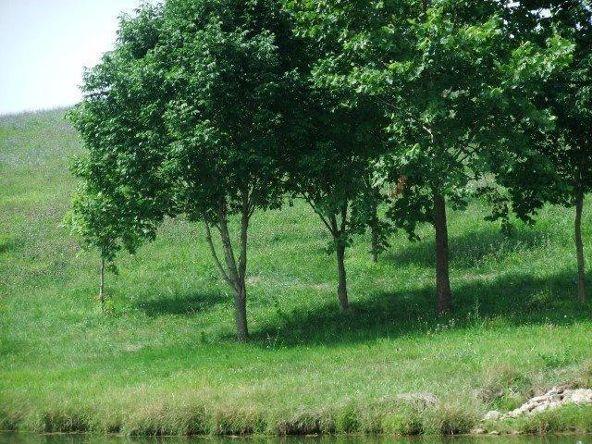 61 Serenity Ct., Cynthiana, KY 41031 Photo 18