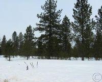 Home for sale: Lot 2 Marten Creek Rd., Trout Creek, MT 59874