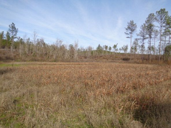 275+/-Ac Cty Rd. 46/Cty Rd 97, Abbeville, AL 36310 Photo 31