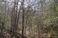 Home for sale: 0 Weshouse Cove, Bryson City, NC 28713