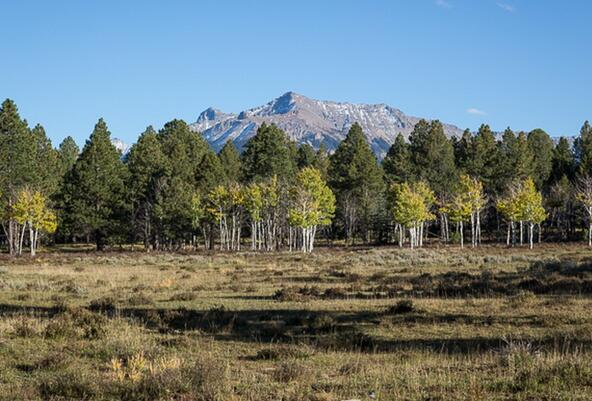 Tbd S. Sage Grouse Rd., Lot 10, Placerville, CO 81430 Photo 17
