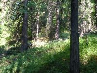 Home for sale: 000 Sierra Buttes Rd., Sierra City, CA 96125