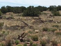 Home for sale: 110 Stirrup Ln., Ancho, NM 88301