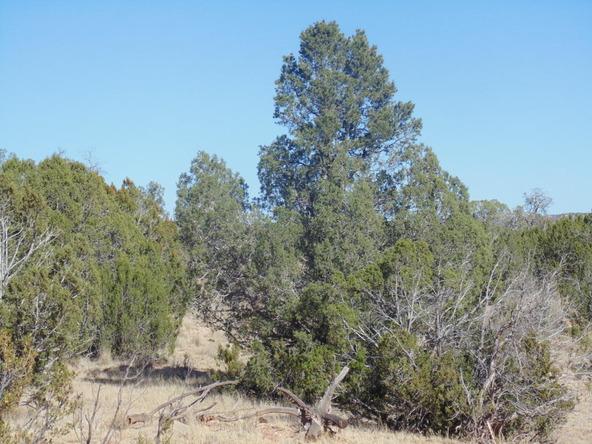 57174 N. Bridge Canyon Parkway, Seligman, AZ 86337 Photo 10
