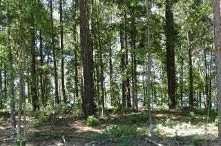 119 Cypress Royale W., Hemphill, TX 75948 Photo 1
