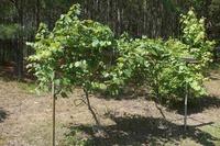 Home for sale: 524 Plantation Creek Dr., Loganville, GA 30052