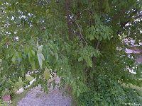 Home for sale: Pike, Pea Ridge, AR 72751
