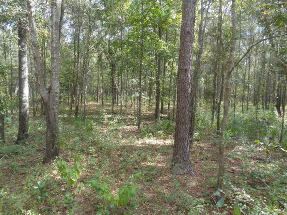 31.2 Ac Johnny Murphy Rd., Dothan, AL 36301 Photo 27