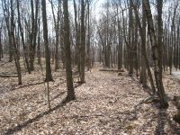 Home for sale: 5.02 Acres Lanes End Dr., Plymouth, WI 53073