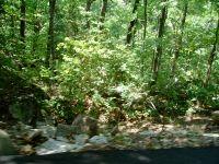 Home for sale: Wyeth Dr., Guntersville, AL 35976