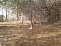 Home for sale: 29.72 Ac County Rd. 374, Donalsonville, GA 39845