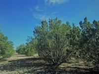 Home for sale: 7400&10z N. Rocky Ridge Rd., Williams, AZ 86046