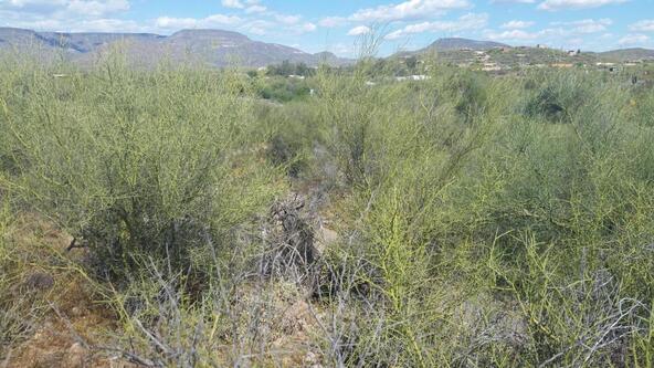 45### N. 8th Pl., New River, AZ 85087 Photo 11