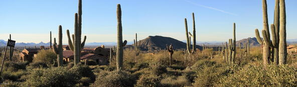 41927 N. Saguaro Forest Dr., Scottsdale, AZ 85262 Photo 15