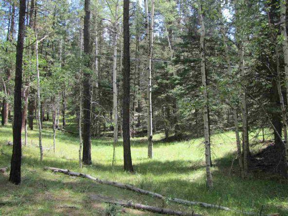 119 W. Pecos Canyon Estates Rd., Tererro, NM 87573 Photo 19