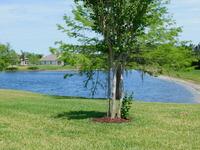 Home for sale: 1643 Areca Palm Dr., Port Orange, FL 32128