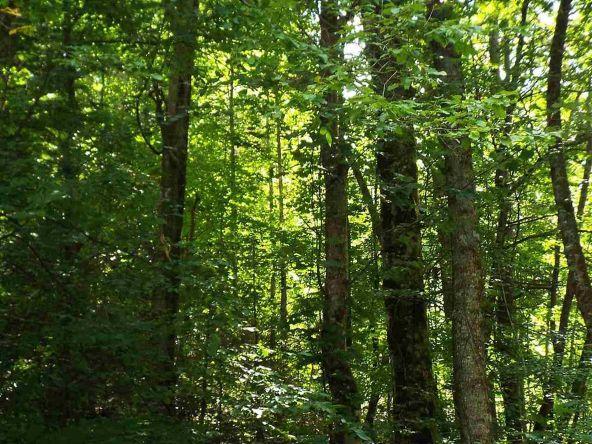Lots 537 & 538 Deep Hollow Rd., Gatlinburg, TN 37738 Photo 32
