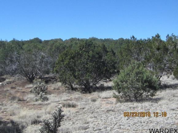 33307 W. El Caballo Rd., Seligman, AZ 86337 Photo 11