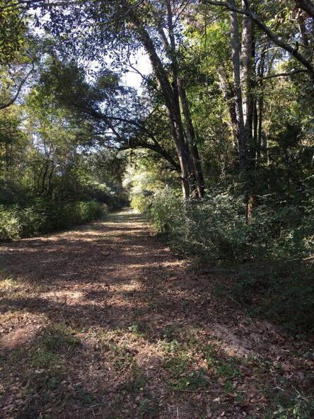 86 Acres Fletcher Smith Rd., Dothan, AL 36301 Photo 6